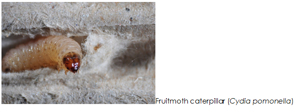 Re-evaluation of codling moth strain resistance as a basis for improved biological control (REFUSE RESIST)