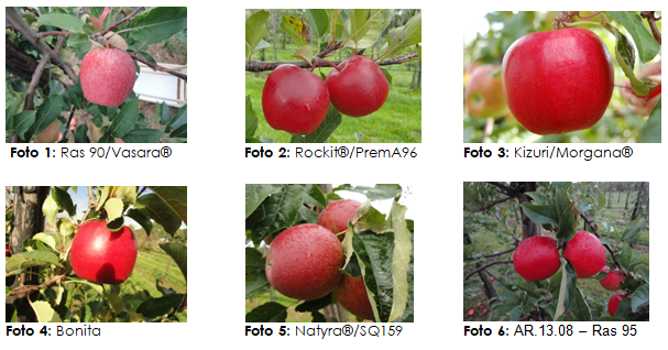 Varietal renewal in apple and pear in function of the customer