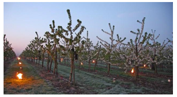 FROSTinno: Innovative and energy efficient frost control in fruit growing