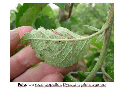 Gevoeligheid appelrassen voor bladluizen