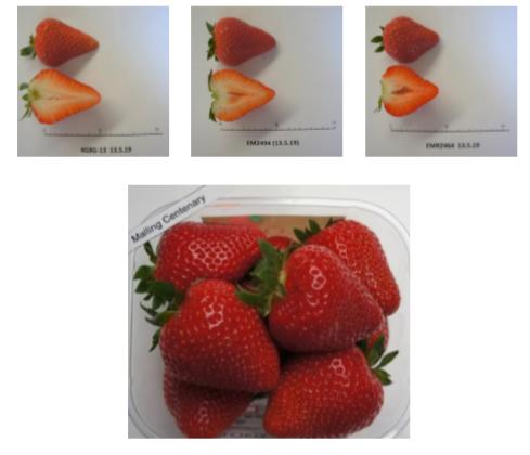 Rassenvernieuwing bij aardbeien en houtig kleinfruit in functie van de klant (gmo)