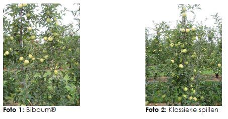 Proeftuinwerking appel