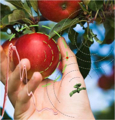 Pluktijdstipvoorspelling van hardfruit