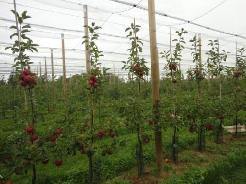 Organische stofopbouw in de biologische landbouw