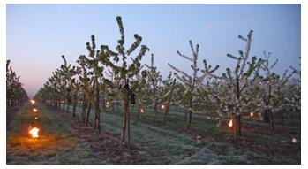 FROSTinno: Innovatieve en energie efficiënte vorstbestrijding in de fruitteelt