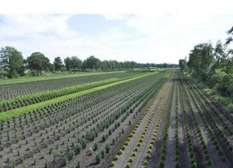 Smart Growers - Onkruidbeheersing (nieuwsbrief 2)
