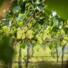 Q&A webinar wijnbouw