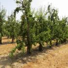 Tegemoetkomingsaanvraag erkende landbouwramp