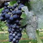 Nieuwe link webinar wijnbouw