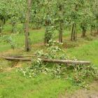 Hulp bij opruimen stormschade toegestaan
